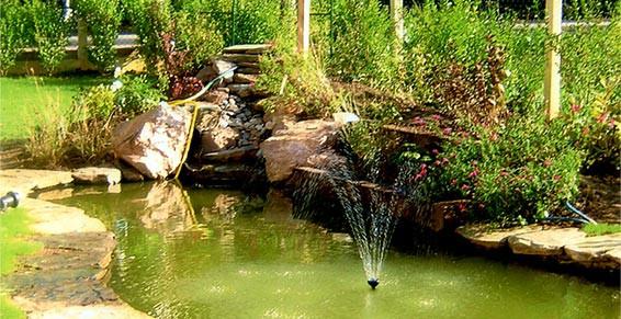 bassin de jardin installation